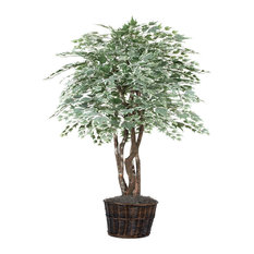6' Silver Maple Executive, Green