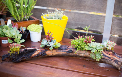 DIY Project: A Driftwood Centrepiece Alive With Succulents