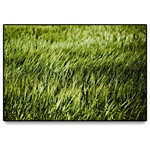 "Giant Art - ""Grass II"" Oversized Framed Canvas, 40"" X 60"" - You can never go wrong with a bold framed canvas. They blend effortlessly with any room decor. These large and elegant canvas art prints will add warmth to your walls"