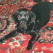 Sammy's photo