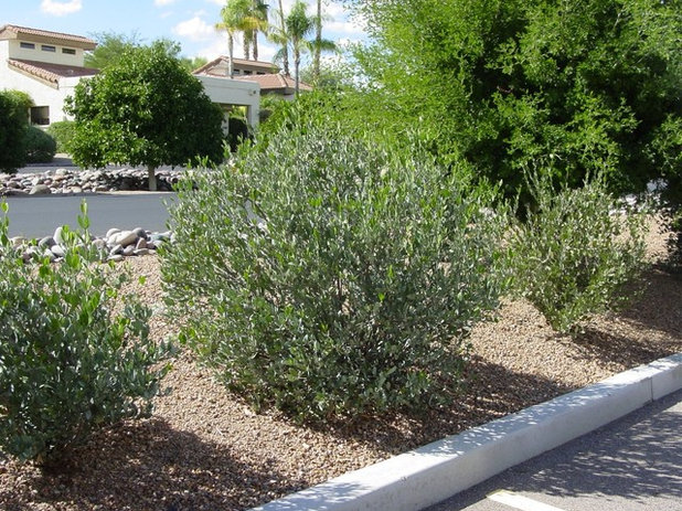 Southwestern  by Noelle Johnson Landscape Consulting