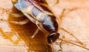Pest Control Craigie