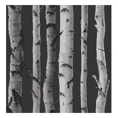 Distinctive Black Birch Tree Wallpaper, Bolt