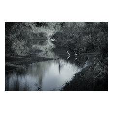 """Lago Maggiore Cranes BW, Fine Art, 18""""x12"""""""