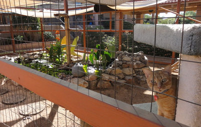 See a Deluxe 'Catio' Built for Feline Fun