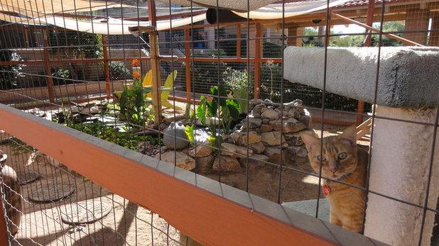 Фьюжн Сад Kitty Enclosure