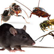 Commercial Pest Control Canberra's photo