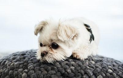 Kleine Fluchten: Diese 39 Haustiere zeigen, wie Gemütlichkeit geht