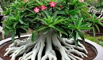 Plumeria.Adenium.Sicilia