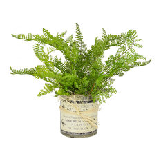 Fern in Container