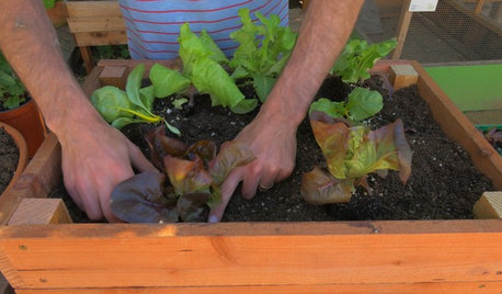 Houzz TV: How to Make and Plant a Veggie Box