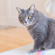 猫と人の幸せな暮らし:ファッションデザイナー・鷺森アグリさんが、愛猫と暮らす家