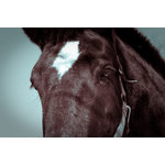 "Pi Photography Wall Art and Fine Art - ""The Eye of Tonk"" Horse Photograph Unframed Wall Art Print, 24""x36"" - ""The Eye of Tonk"" Horse Photograph - Luster Photo Paper Unframed Wall Art Print"