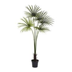 7' Fan Palm Tree UV Resistant, Indoor/Outdoor