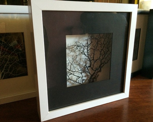 3D box sea fan frames