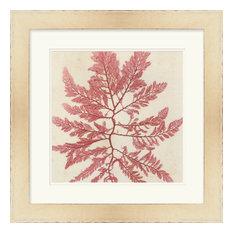 Surya LJ-4034 Wall Art Brilliant Seaweed V Red 24  x24   Square Artwork