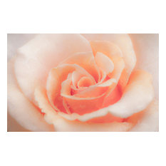 Rose Glow, Canvas Giclee