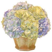 Hydrangea in Garden Pot