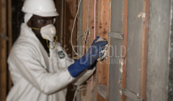 Professional Mold Remediation Services