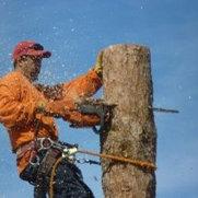 Foto de Wichita Tree Service Pros