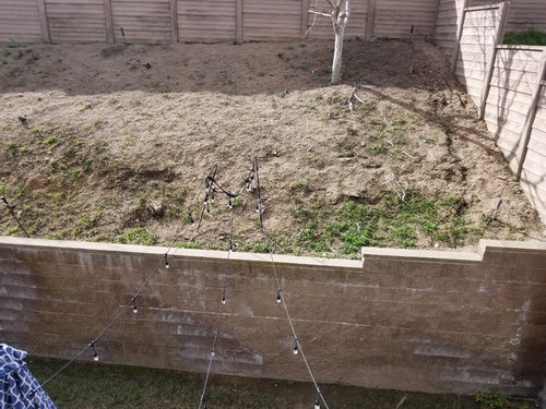What To Do With My Unattractive Retaining Wall And Slope