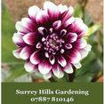 Surrey Hills Gardening's profile photo