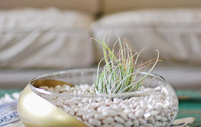 Bowl Over Guests With a DIY Air Plant Terrarium