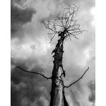 "EHL Photography - Digital Photo Print, Withered 4 11""x14"" - This is the fourth photo in a series of four. This listing is for an unmatted and unframed print on matte photo paper."