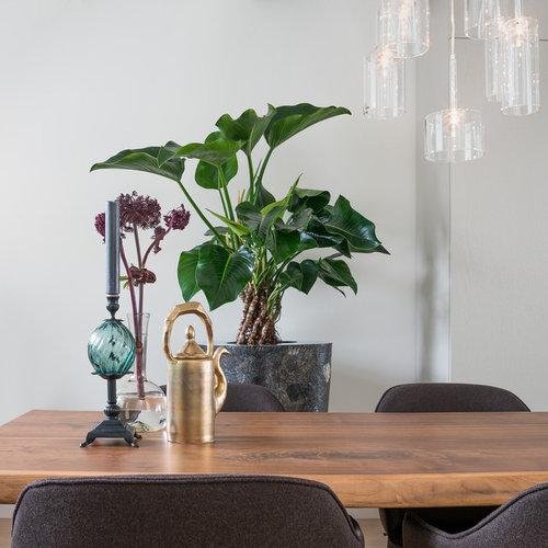 Appartamento Amsterdam - Prodotti