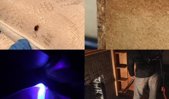 BedBug Treatment