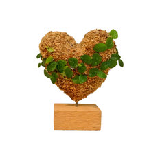Small Heart Planted Topiary