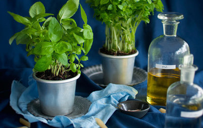 7 Fresh Ways to Plant Herbs – No Matter What Size Your Space