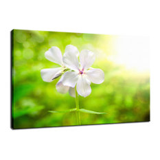 """""""Beauty of the Forest Floor"""" Floral Nature Photo Fine Art Canvas Wall Art Print,"""