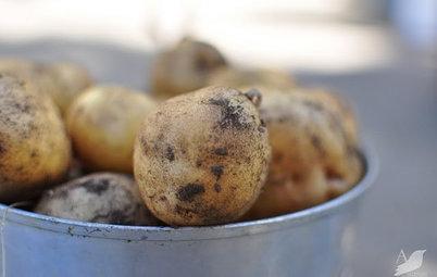 Cool-Season Vegetables: How to Grow Potatoes