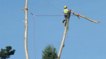 Démontage en rétention sur eucalyptus de grande hauteur