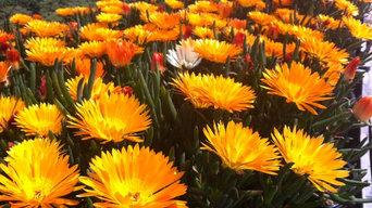 Produzione primaverile piante fiorite