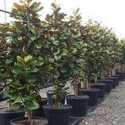 Green Leaf Nurseries's photo