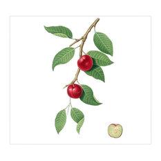"""Cherry Plum"" Gallesio Botanical Print, 46x42 cm"