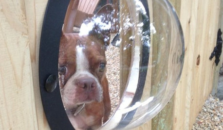 Houzz Call: Show Us Your Pet Projects!