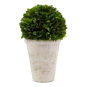Boxwood Ball Topiary, 7in D X 10 1/2in H