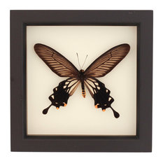 Windmill Butterfly Insect Art Display