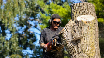 Tree Removal Services in Southbury, CT