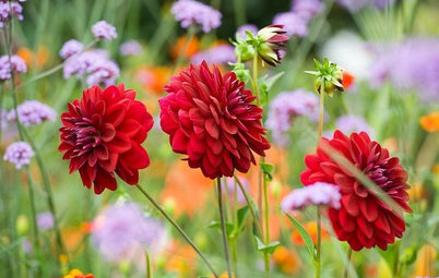 Ask a Garden Designer: What Do I Need to Do in the Garden in May?