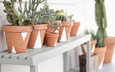 Er du vild med kaktus? Vi går bag om den populære plante