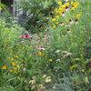 3 Ways Native Plants Make Gardening So Much Better