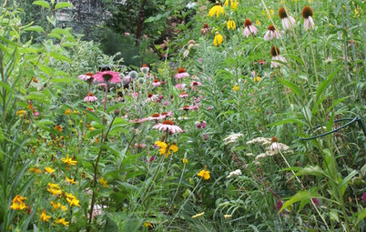 3 Ways Native Plants Make Gardening So Much Better