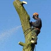 Fairington Tree Surgery's photo