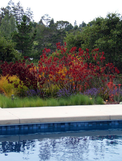 Great design plant red kangaroo paw for Red landscape architects
