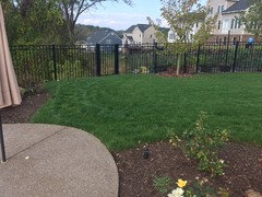 Need Help Assessing My Lawn Issue
