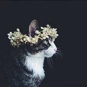 Kittin's photo